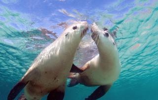 Australia 10 increibles fotos de su naturaleza