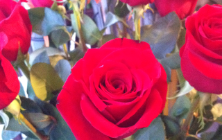 Fotos rosas Sant Jordi