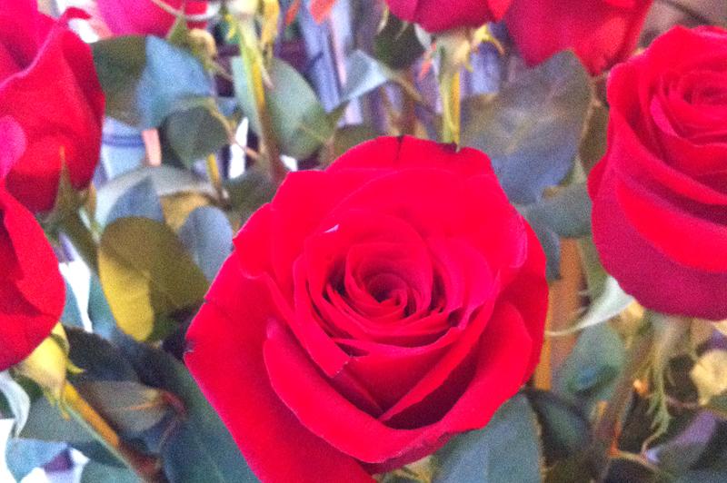 25 rosas para Sant Jordi