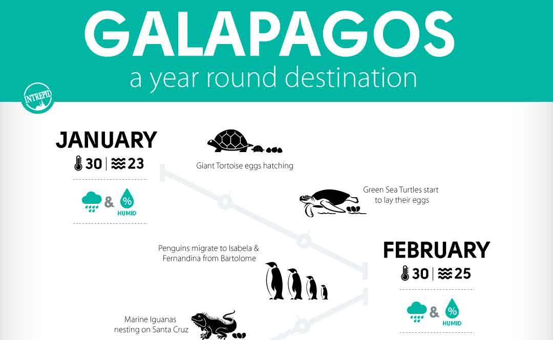 Cuándo visitar las Islas Galápagos